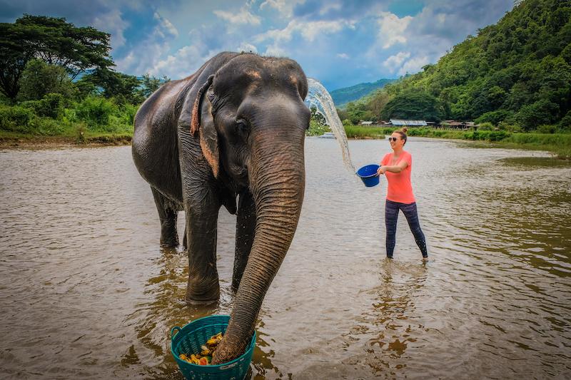 Chiang Mai Elephant Day Care Tour